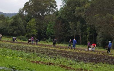 La Finca El Cabillón, ejemplo de integración, defiende su producción «ecológica y segura»