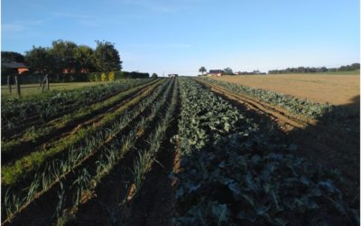 Técnicas y rentabilidad de especies y variedades apropiadas para las condiciones de cultivo ecológico en Asturias